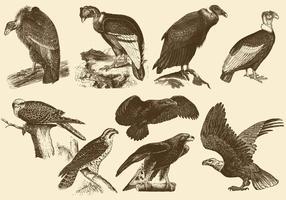 Disegni di uccelli di preghiera vettore