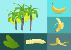 Illustrazione di elementi di banana vettore