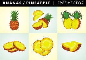 Ananas / Ananas vettoriali gratis