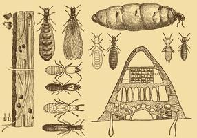 Vettori della termite del disegno di vecchio stile