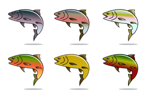 Rainbow Trout Vector gratuito