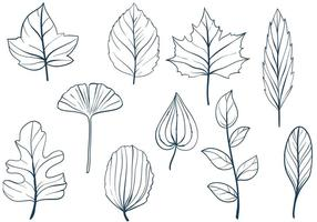 Vettori di foglie gratis