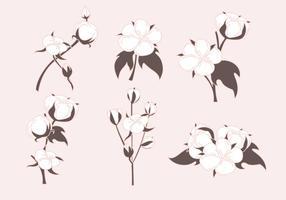 Vettori di piante di cotone