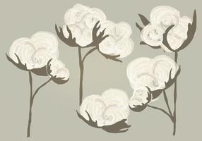 Illustrazione di cotone acquerello vettoriale