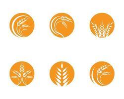 set di logo di grano di agricoltura