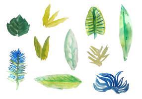 Vettori di foglie tropicali dell'acquerello