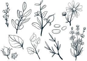 Vettori di erbe cosmetiche
