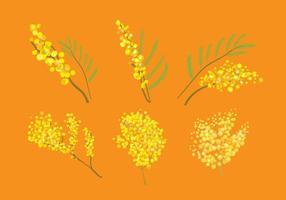 vettore mimosa