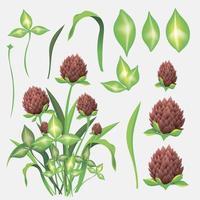 set di disegno di foglie e fiori di trifoglio vettore
