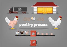 Illustrazione libera di vettore di processo del pollame