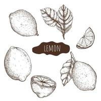 insieme disegnato a mano di limone vettore