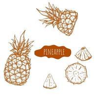 insieme disegnato a mano di ananas vettore