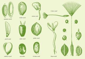Vecchi semi di disegno