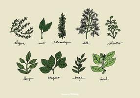 Vettori di erbe disegnati a mano