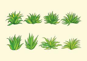 pianta maguey vettore