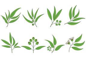 Set di vettore di eucalipto