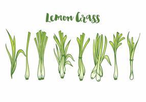 Set di icone di erba limone vettore