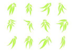 Vettore di logo di foglia di eucalipto