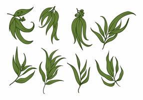 Set di icone di eucalipto vettore