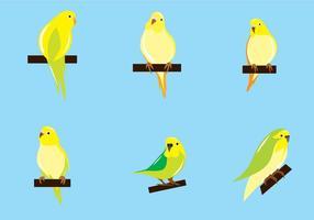vettore di pappagallino