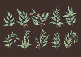 Icone di eucalipto vettore