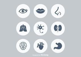 Anatomia umana vettoriale icone