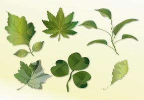Set di foglie
