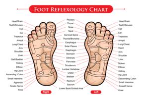 Vettore del grafico di reflexology del piede