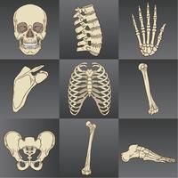 set di ossa umane vettore