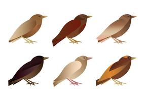 Collezione di uccelli vettoriali