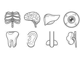 Vettore dell'icona dell'organo umano