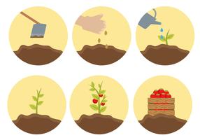 Vettore libero del ciclo di vita della pianta