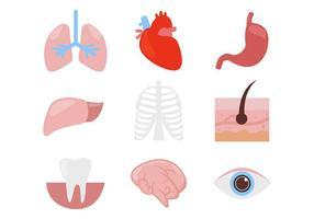 Vettore delle icone delle parti del corpo dell'organo umano