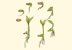 crescere set di piante vettore