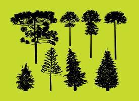 silhouette alberi di conifere