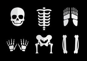 Vettore di ossa umane