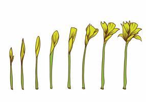 Il fiore giallo cresce insieme della pianta vettore