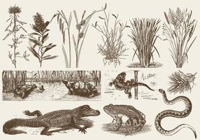 Fauna e flora della palude vettore