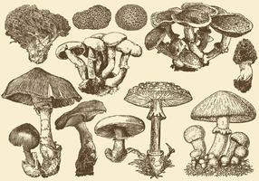 Funghi selvatici vettore