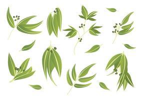 Icone gratuite di eucalipto vettore