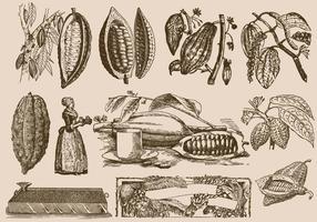 Fagioli e processo di cacao vettore