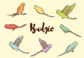 Vettore gratuito di Budgie