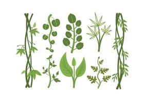 Vettori di piante tropicali