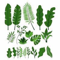 raccolta di foglie verdi