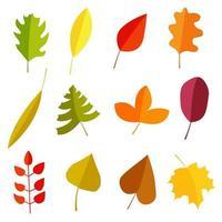 set di foglie d'autunno vettore