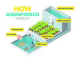 diagramma del sistema acquaponico