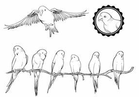 pappagallino set vettore