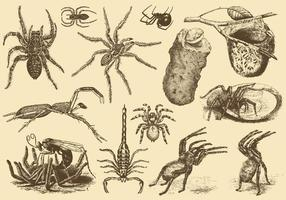 Aracnidi velenosi