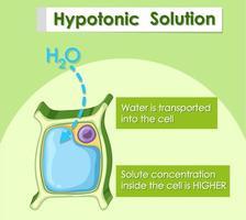 diagramma che mostra la soluzione ipotonica vettore