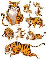una raccolta di personaggi di tigre vettore